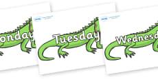 Days of the Week on Iguanas