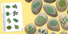 Identifying and Comparing Leaves Story Stone Image Cut Outs