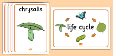Life Cycle of a Butterfly Display Posters