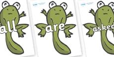 Tricky Words on Froglets
