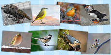 Birds Photo Clip Art Pack