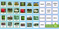 Plant Groups Sorting Cards