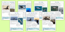 New Zealand Native Marine Mammals Fact File