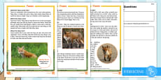 KS1 Foxes Differentiated Comprehension Go Respond Activity Sheets