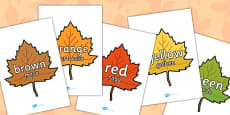 Colour Words on Autumn Leaves Romanian Translation