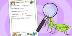 Minibeasts Investigation Lab Observation Form - Australia