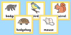 Animal Food Chain Cards