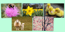 Spring Photo Clip Art Pack