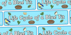 Blue Tit Life Cycle Display Banner