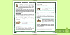 Hedgehogs Differentiated Fact File