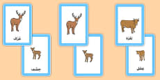 Animals and Their Young Matching Cards Arabic