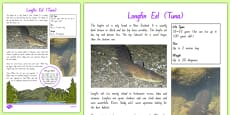 New Zealand Native Eels Fact File