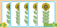 Póster DIN A4: Vocabulario matemático - Flores