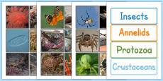 Invertebrate Sorting Cards