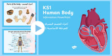 Human Body Information PowerPoint Arabic/English