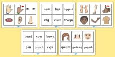 Parts Of The Body Word and Picture Matching Cards Welsh