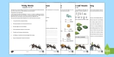 Grammar: Using 'a' or 'an' Activity Booklet