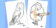 Owl Colouring Sheets