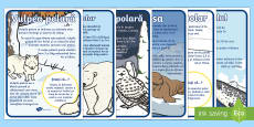 Animale polare - Planșe informative