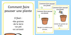 How to Grow a Plant Posters French