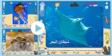 Under The Sea Photo PowerPoint Arabic