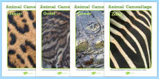 Animal Fur and Skin Camouflage Photo Posters
