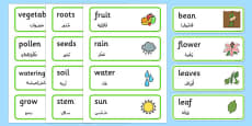 Growth Topic Word Cards Arabic Translation