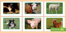 * NEW * Farm Animal Display Photos