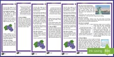KS2 New Year Differentiated Reading Comprehension Activity