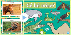 Who Am I? Animal Game PowerPoint Gaeilge