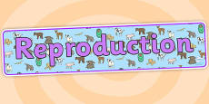 Reproduction Animals Display Banner