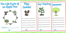 Apple Tree Life Cycle Workbook