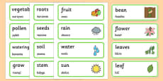 Growth Topic Word Cards Polish Translation