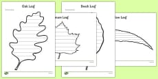 Leaf Themed Review Activity Sheet Pack