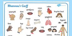 My Body Word Mat Cymraeg