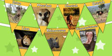 Safari Animal Photo Bunting