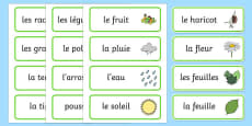 Growth Topic Word Cards French