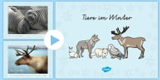 Winter Animals Photo Display PowerPoint - German