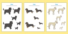 Dog-Themed Size Ordering