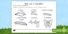 Ficha de tirar el dado y colorear para ayudar en la enseñanza de: La pequeña oruga glotona