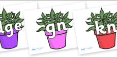 Silent Letters on Plants