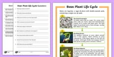 Bean Plant Life Cycle Differentiated Reading Comprehension Activity