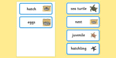 Sea Turtle Life Cycle Word Cards (under the Sea)