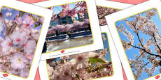 Chinese Blossom Tree Display Photos