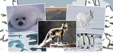 Polar Regions Photo Clip Art Pack