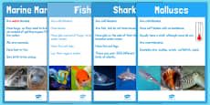 Under the Sea Animal Groups Display Posters Photos