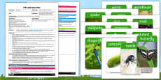 Minibeasts Whats In The Box EYFS Adult Input Plan and Resource Pack