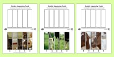 Farm Animals Number Sequencing Photo Puzzles
