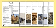Desert Animals Fact Sheets Romanian Translation