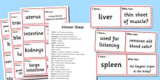 Organs and their Functions Loop Cards